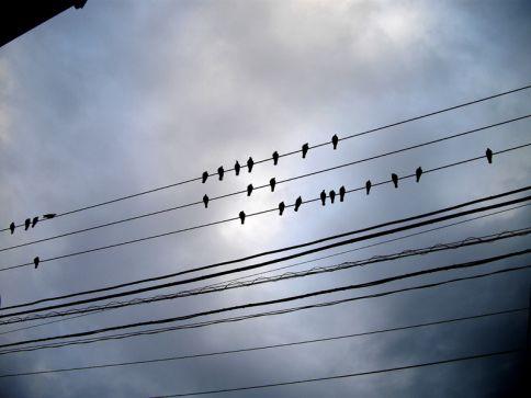 oiseautokyo