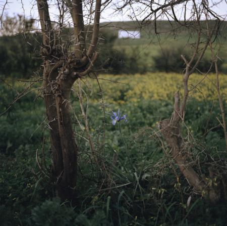 Iris et ronces - Yto Barrada
