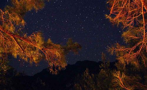 Dans la maison-arbre d'Hasan : une vue sur un ciel toujours étoilé