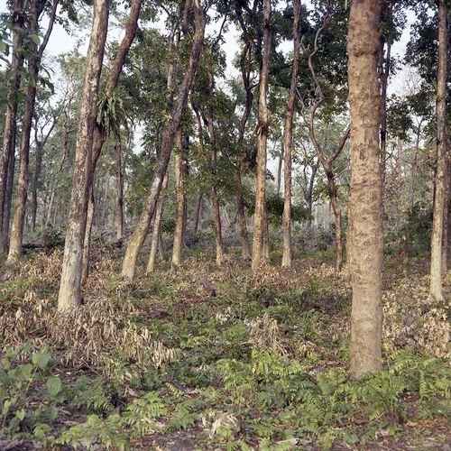 Nature Park, South Khairbari, West Bengal