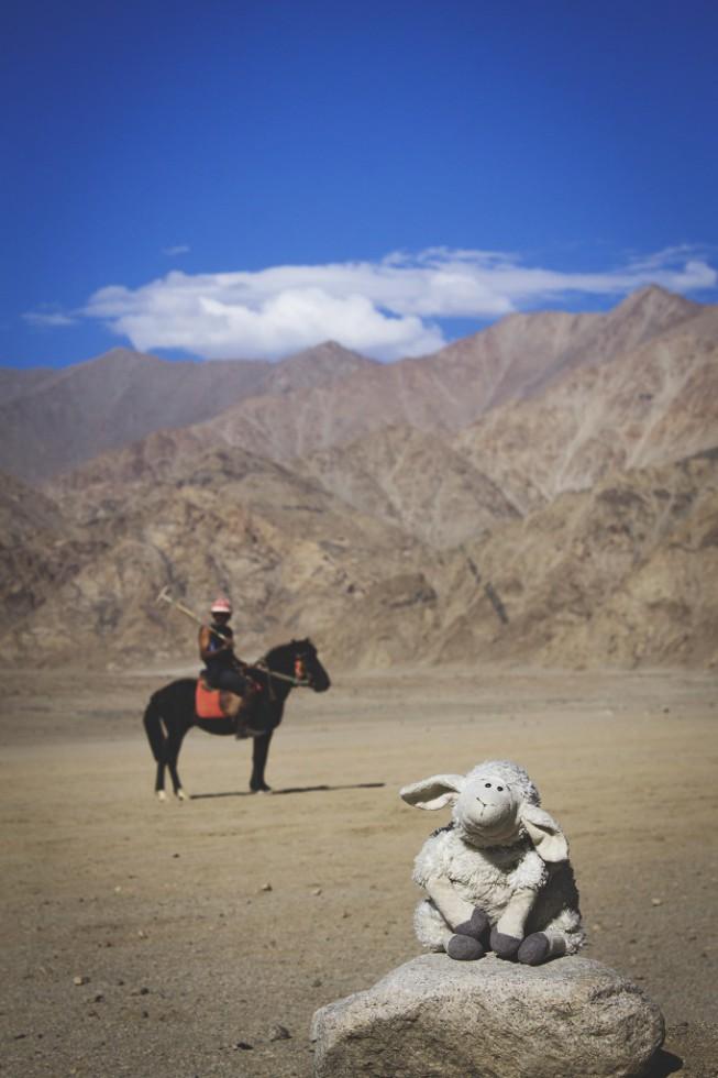 Ladakh Polo Lamb Club