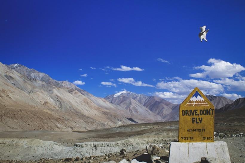 The ladakhi lamb