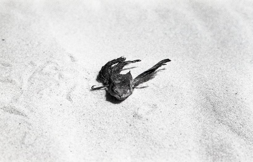 Brésil Poisson Chat